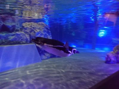 スカイツリー&すみだ水族館に行きました!